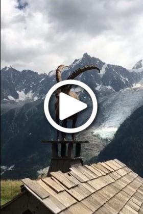 ibex-vid-thumbnail